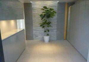 玄関の観葉植物